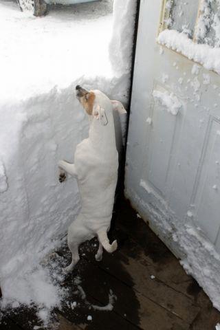 vinterjycke1
