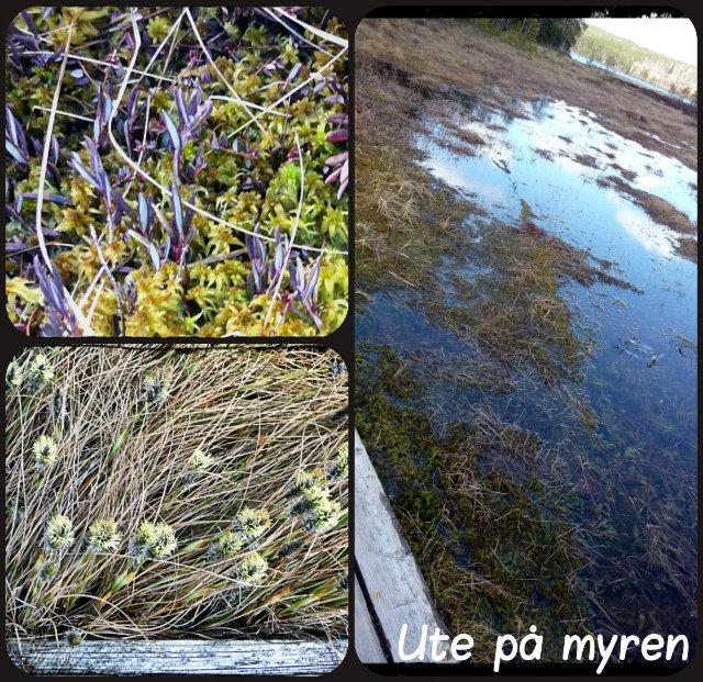 myren-collage