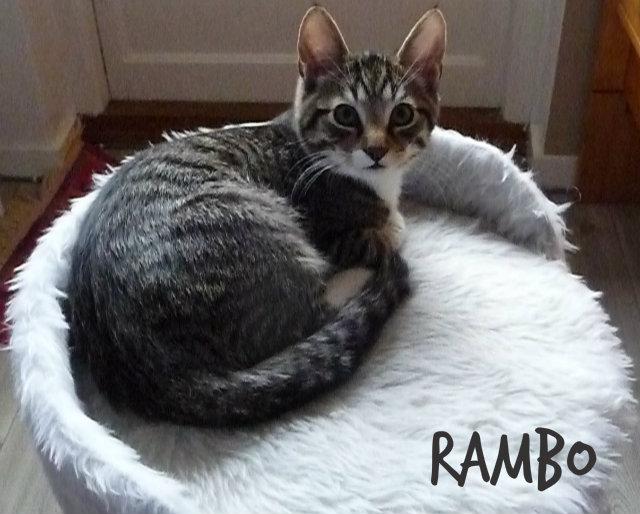 rambobus8