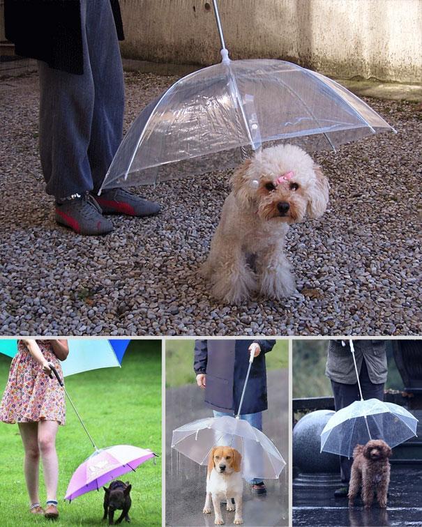 paraplytillhund
