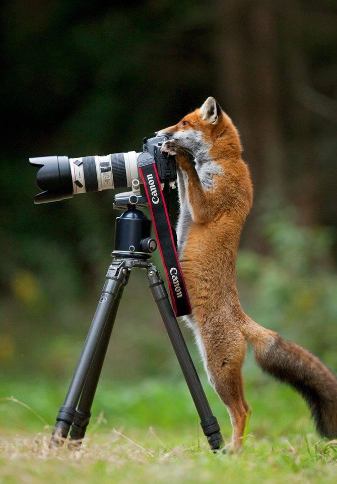 fotorav
