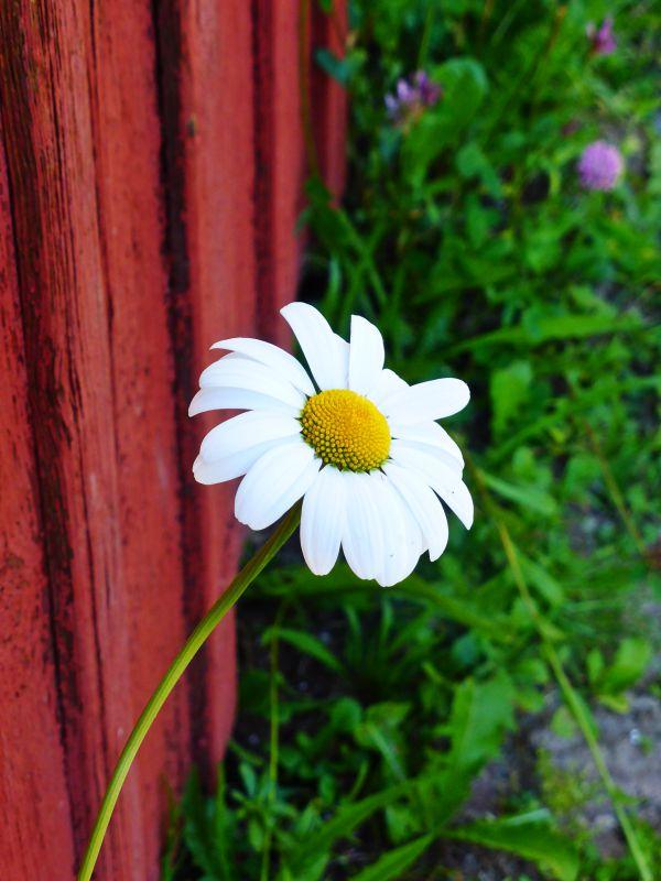 blom6