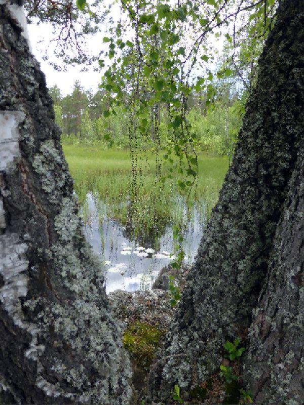 natur1