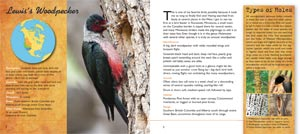woodpecker page 2