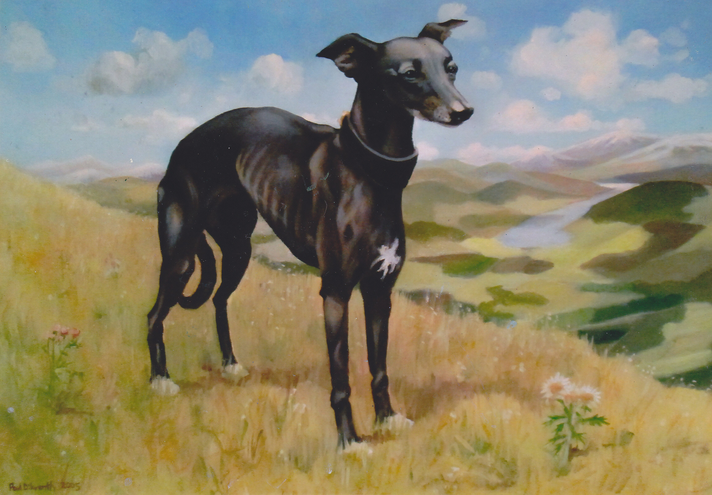 Dog in landscape._0011