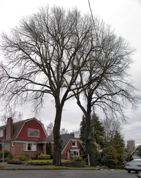 lankmark-trees-kitkorn-grab-1-5-9-mr
