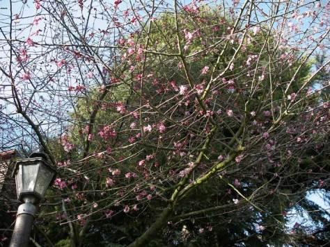 spring-1st-bloom-mr