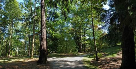 arboretum-forest-pan-web