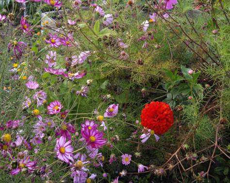 red-flower-in-tangle-web