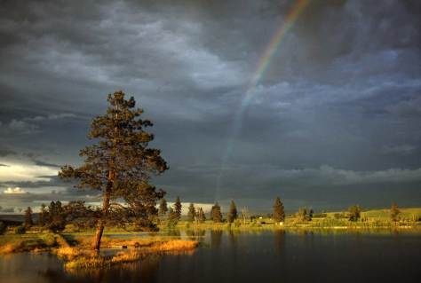 Pine-Rainbow-Lk-Grn-WEB