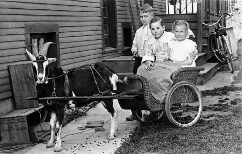 Frank-DeBruyn-w-goat-&-wicker-wagon-4123-Eastern-ca17-web
