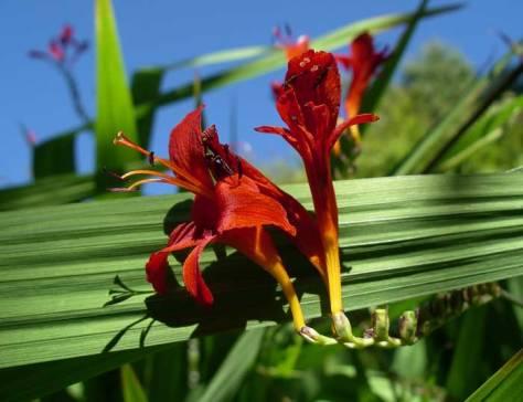 f-Red-Flower-7_30_7mr-web