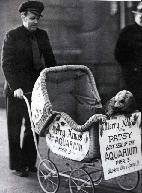 A younger Ivar takes his Aquarium star Patsy to visit Santa at Frederick and Nelson's department store.