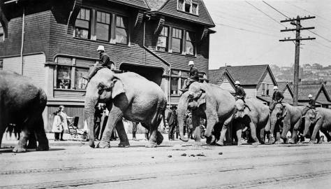 Most likely near 5th and Thomas. Queen Anne Hill is seen on the horizon. The future Seattle Center campus was the favorite circus venue in the early 20th Century. The circus animals were often paraded from the circus grounds thru the business district to help promote the show.
