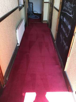 Greasy Carpet Clean (after)