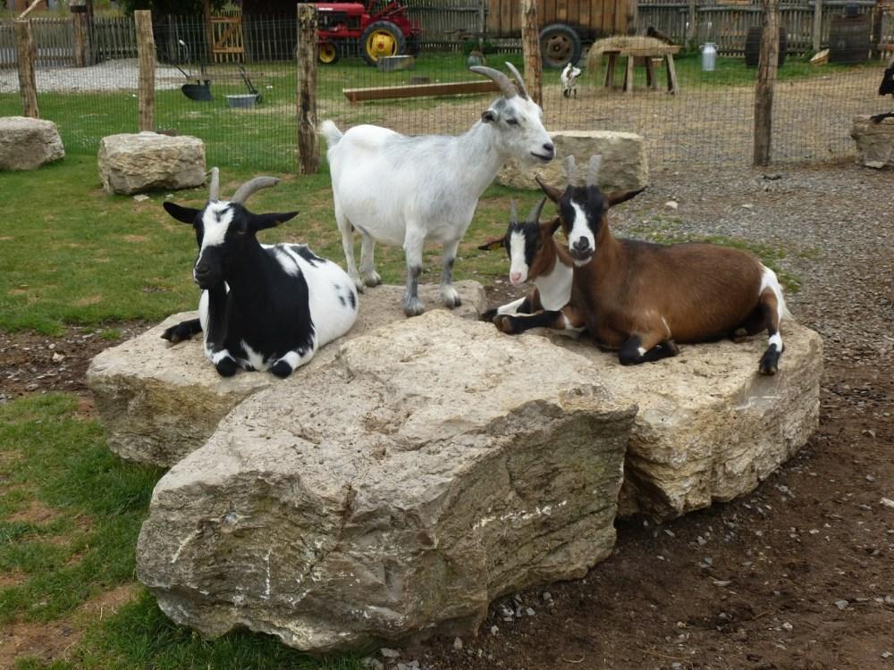 Parc animalier de Ste Croix (Moselle) 8 août 2013 (3/6)