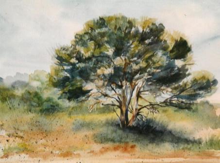 L'arbre du Villaret