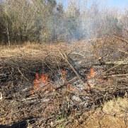 Brush Pile burning picture 1