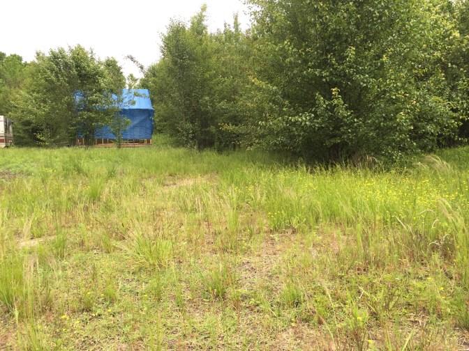 Tiny Cabin Overgrown Yard 2, May 2016
