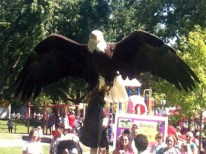 CNE Birds of Prey