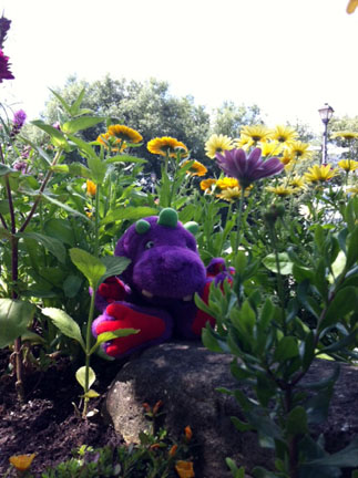 Stopping to smell the flowers with George