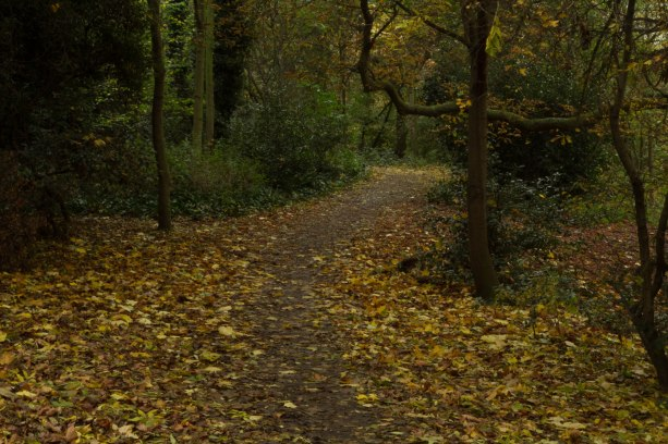 landscape path in woods
