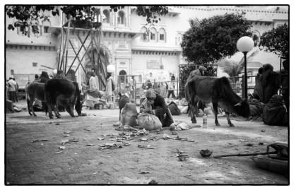 India_tramp-Market
