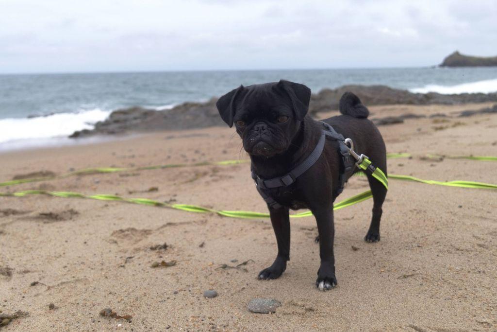 Pauli liebt es, am Strand zu sein