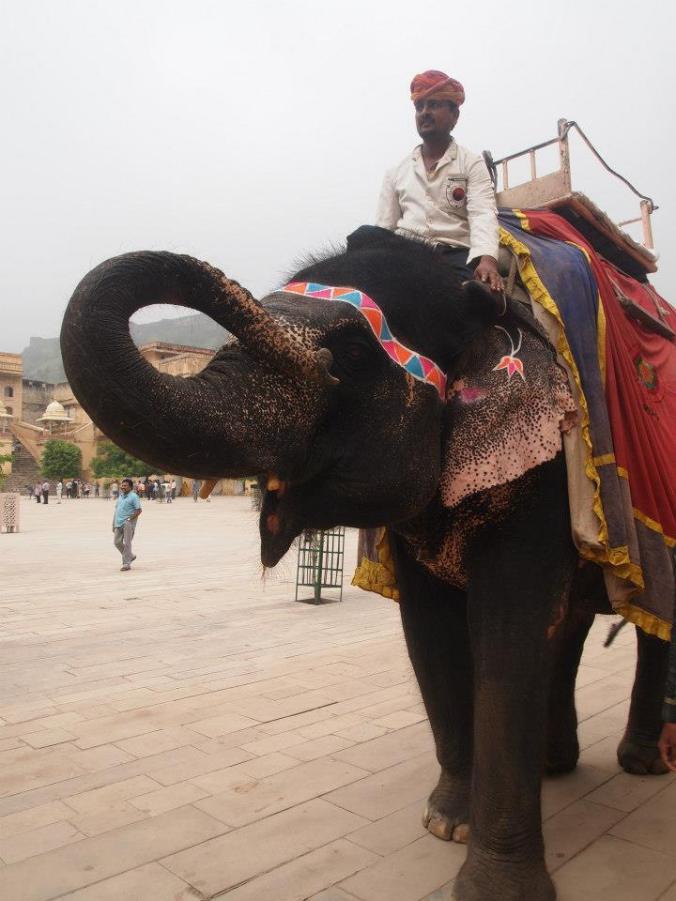 Elefante preparado para llevar a personas en el Fuerte de Amber