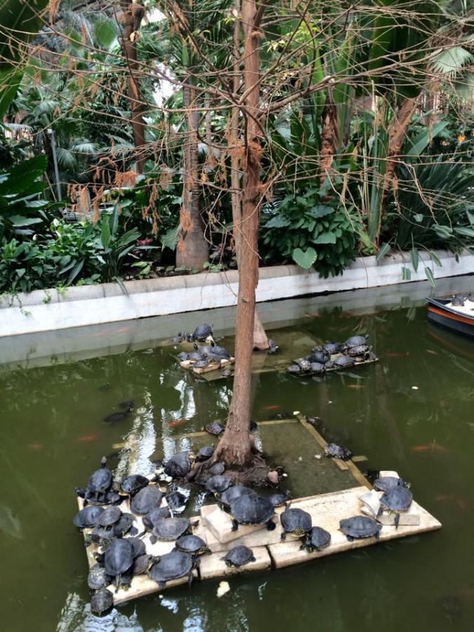 Las tortugas en la Estación de trenes de Atocha