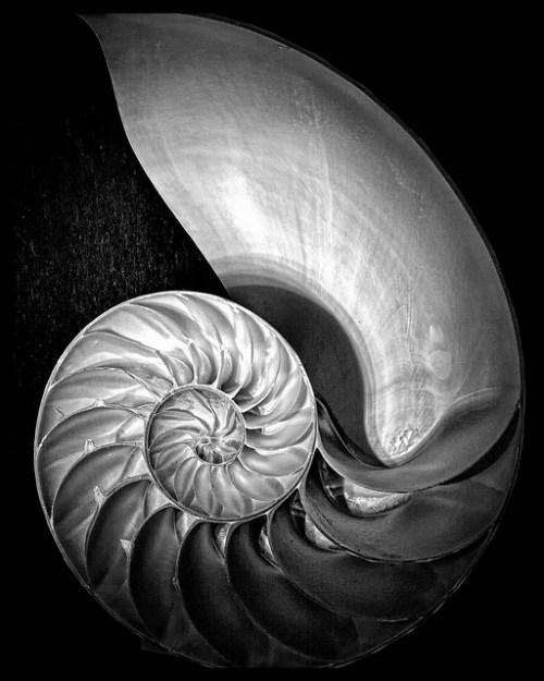 Foto: Edward Weston
