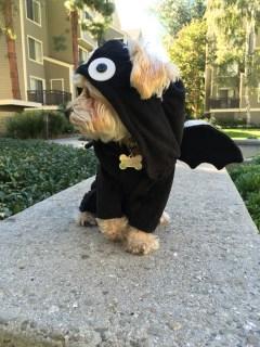 bat costume- side look