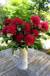 These gorgeous Australian native blooms gave the Waratah its name.