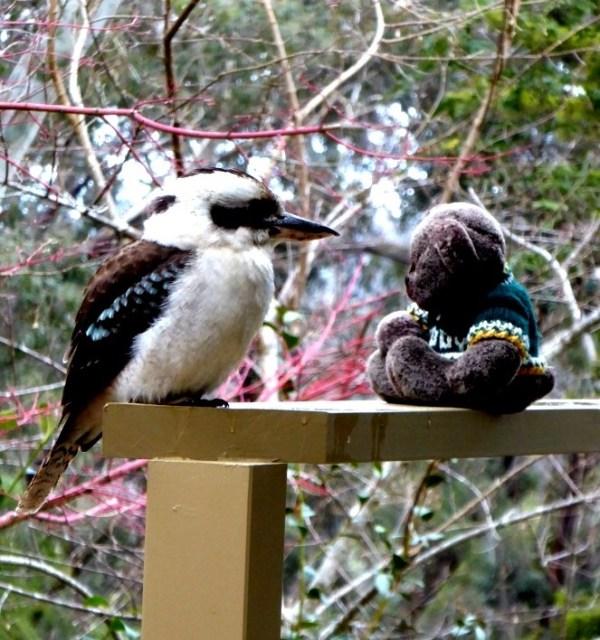 Birdwatcher Editor Des and kookaburra