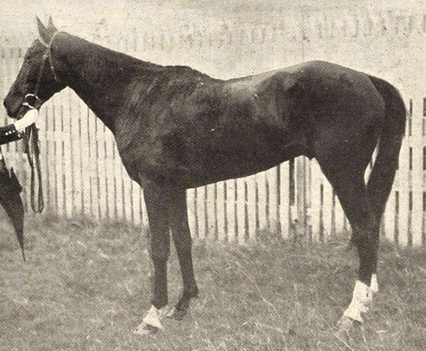 Ally Sloper, the horse involved in the race scandal.