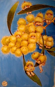 May Gibbs wattle