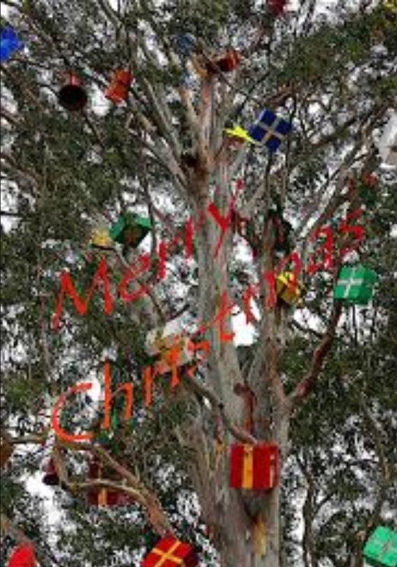 Gum tree for Christmas