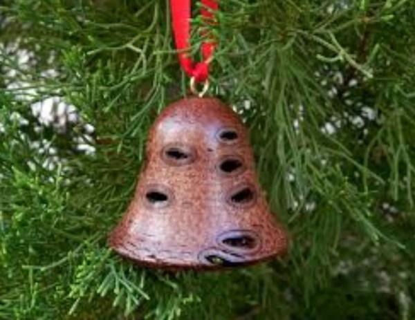 Banksia capsule Christmas bell
