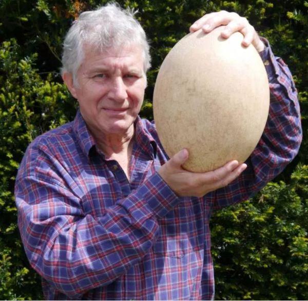 Errol Fuller with Elephant Bird egg