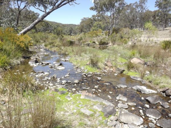 Billabong waters at Emmaville, where traces of arsenic were found.