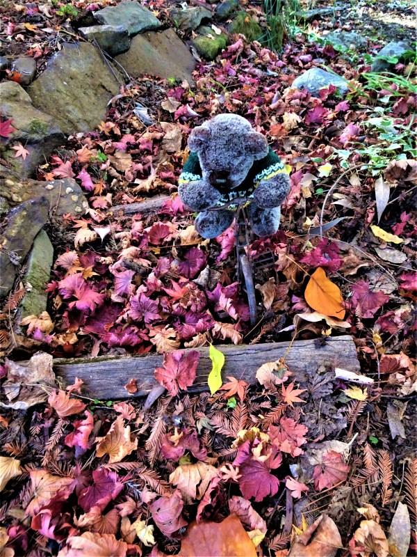 Editor Des riding through autumn leaves