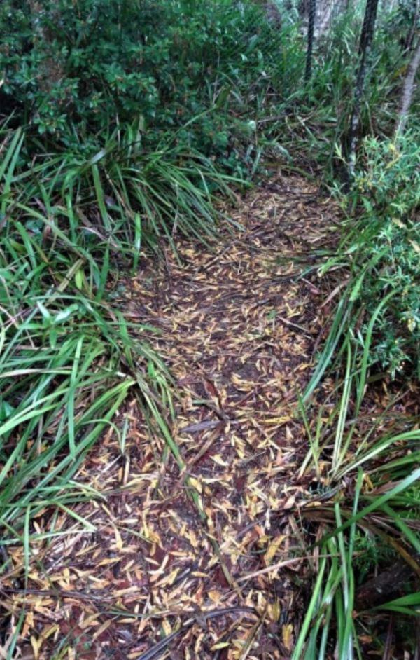 Path to Wonga nest.