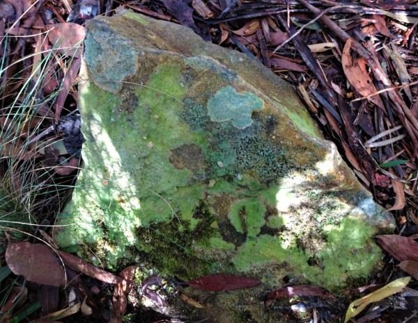 Lichens on rock