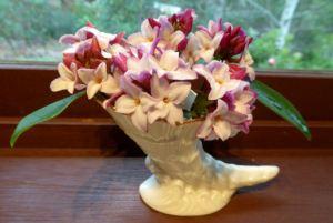 Daphne in miniature cornucopia vase.