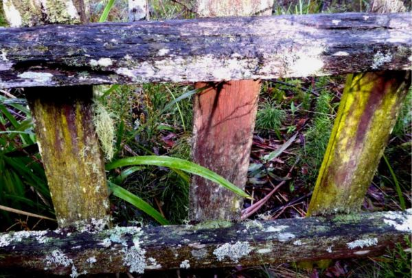 Lichen on old fence.