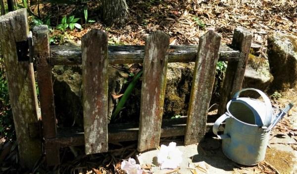 Lichen on old gate..