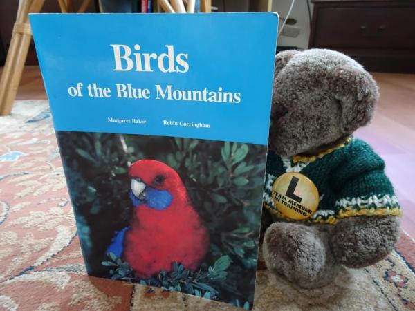 Editor Des studying birds of the Blue Mountains.