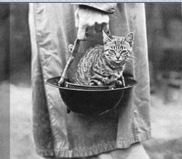 Cat in a soldier's helmet.
