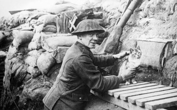 Cat in war trenches