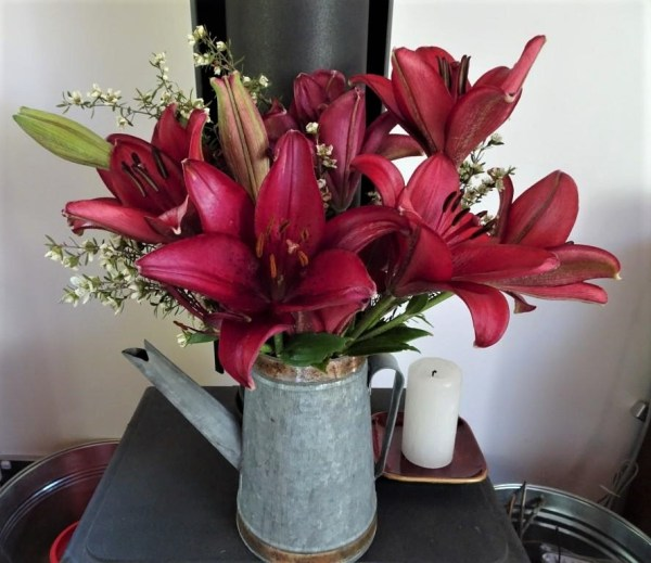 'Christmas' lilies.